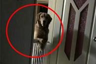 Đang ngủ say thì chó cưng điên cuồng liếm mặt, người phụ nữ thức giấc hoảng loạn gọi hàng xóm, thầm cảm ơn con vật đã cứu sống tính mạng