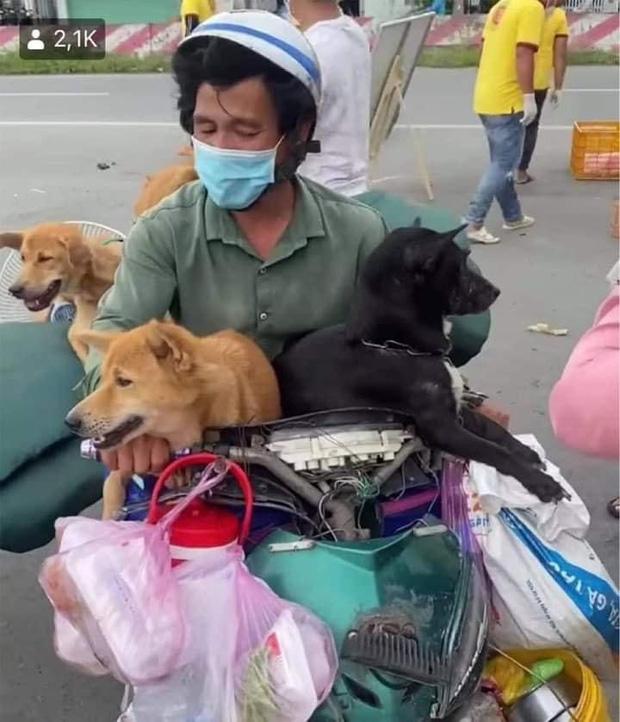 Sao Việt lên tiếng trước thông tin 15 chú chó bị thiêu huỷ: Văn Mai Hương - Sĩ Thanh quá đau lòng, Hồng Ánh bật khóc không dám tin-1