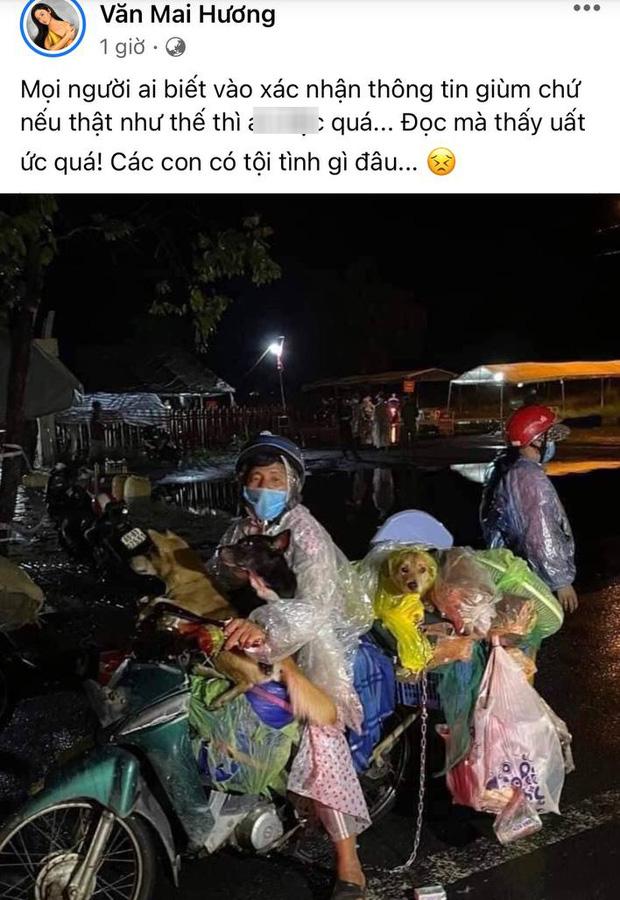Sao Việt lên tiếng trước thông tin 15 chú chó bị thiêu huỷ: Văn Mai Hương - Sĩ Thanh quá đau lòng, Hồng Ánh bật khóc không dám tin-2