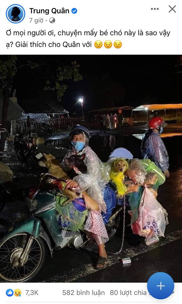 Sao Việt lên tiếng trước thông tin 15 chú chó bị thiêu huỷ: Văn Mai Hương - Sĩ Thanh quá đau lòng, Hồng Ánh bật khóc không dám tin-8