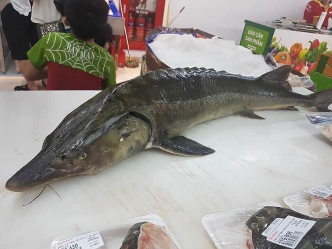 Loại cá đặc sản ở Việt Nam bán trên chợ mạng giá siêu rẻ, người dân tranh thủ ăn sang-2