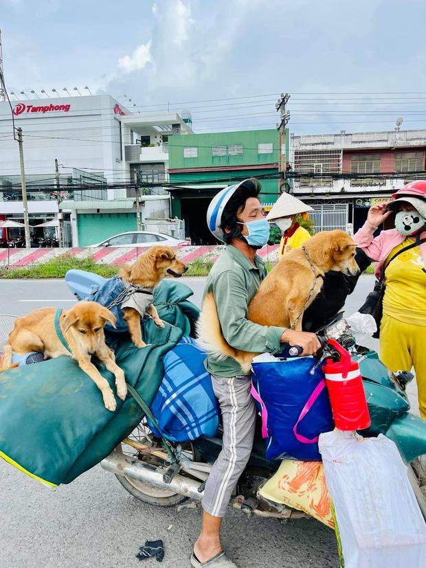 Vụ đàn chó 15 con bị tiêu huỷ: 1 chú cún may mắn sống sót, người chủ mới khẳng định sẽ tặng lại vì nó là 1 phần kỷ niệm của cô chú-2