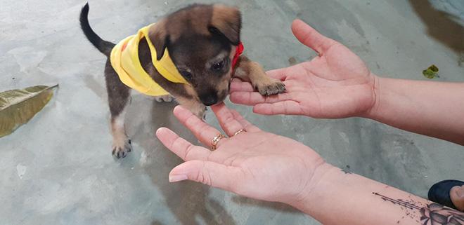 Vụ đàn chó 15 con bị tiêu huỷ: 1 chú cún may mắn sống sót, người chủ mới khẳng định sẽ tặng lại vì nó là 1 phần kỷ niệm của cô chú-3