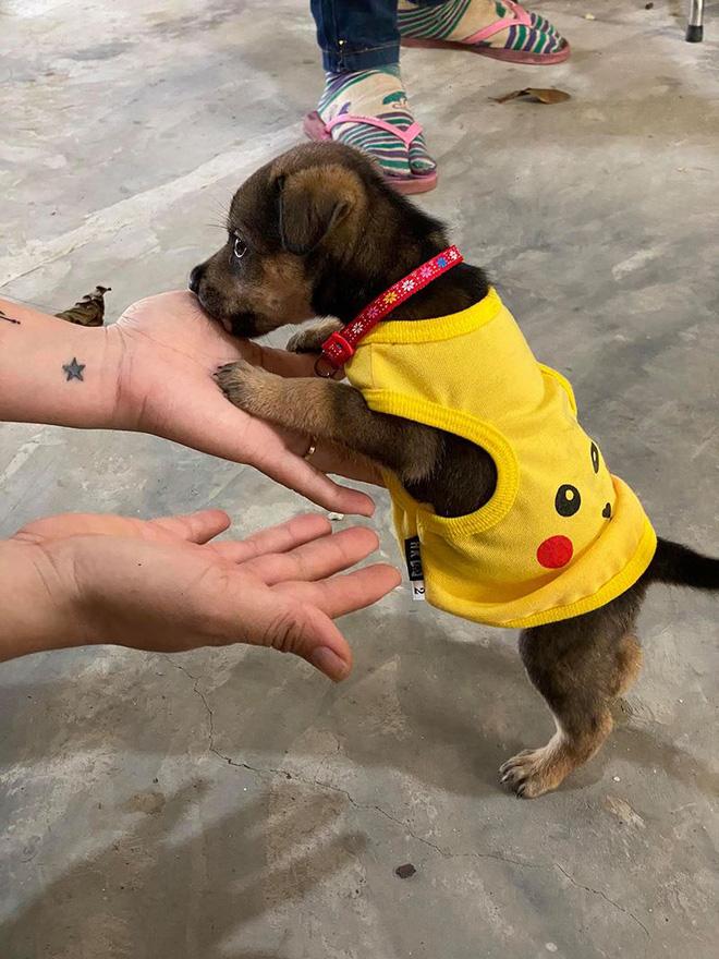 Vụ đàn chó 15 con bị tiêu huỷ: 1 chú cún may mắn sống sót, người chủ mới khẳng định sẽ tặng lại vì nó là 1 phần kỷ niệm của cô chú-4