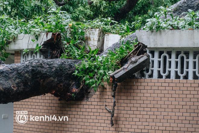 Hà Nội: Bão số 7 gây mưa lớn cả ngày, nhiều cây xanh bật gốc, đè bẹp xế hộp Camry-3