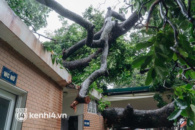 Hà Nội: Bão số 7 gây mưa lớn cả ngày, nhiều cây xanh bật gốc, đè bẹp xế hộp Camry-4