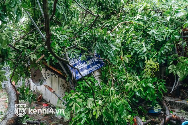 Hà Nội: Bão số 7 gây mưa lớn cả ngày, nhiều cây xanh bật gốc, đè bẹp xế hộp Camry-7
