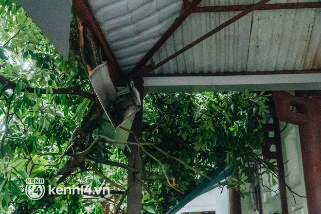 Hà Nội: Bão số 7 gây mưa lớn cả ngày, nhiều cây xanh bật gốc, đè bẹp xế hộp Camry-8