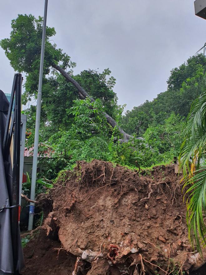 Hà Nội: Bão số 7 gây mưa lớn cả ngày, nhiều cây xanh bật gốc, đè bẹp xế hộp Camry-11