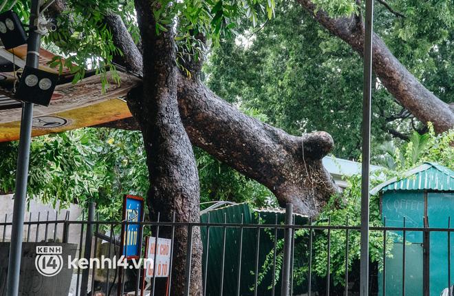Hà Nội: Bão số 7 gây mưa lớn cả ngày, nhiều cây xanh bật gốc, đè bẹp xế hộp Camry-12