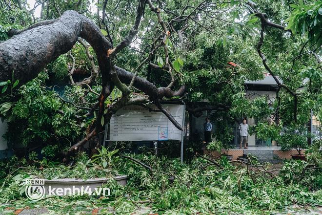 Hà Nội: Bão số 7 gây mưa lớn cả ngày, nhiều cây xanh bật gốc, đè bẹp xế hộp Camry-9