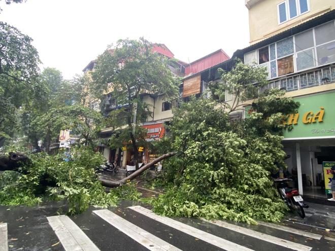 Hà Nội: Bão số 7 gây mưa lớn cả ngày, nhiều cây xanh bật gốc, đè bẹp xế hộp Camry-14