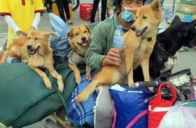 Vụ tiêu hủy 15 chú chó ở Cà Mau: 2 vợ chồng chủ đều không phải người địa phương, đang xác minh xem có khai báo gian dối hay không-1