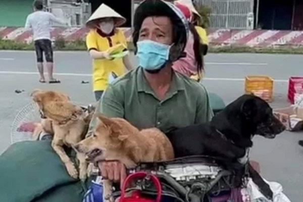 Vụ 15 chú chó bị tiêu hủy ở Cà Mau: Trưởng trạm y tế xin nghỉ việc vì không chịu nổi áp lực dư luận-1