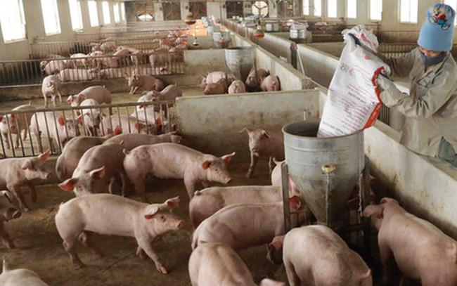 Giá lợn hơi chạm đáy, thịt lợn ở chợ và siêu thị vẫn đứng im-1