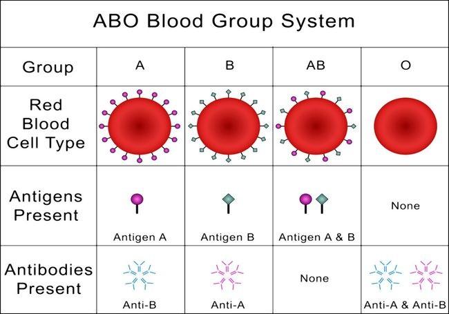 """Nếu bố mẹ thuộc hai nhóm máu này thì hầu hết con cái sinh ra đều là những đứa trẻ thông minh"""", hãy xem con bạn thuộc trường hợp này không!.-2"""