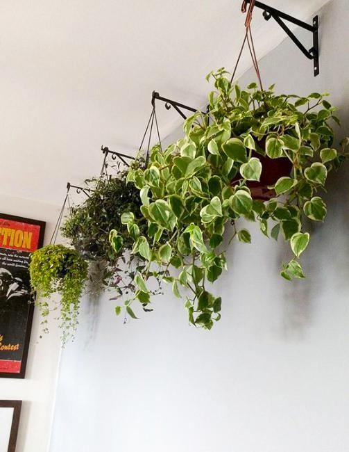 15 ý tưởng trồng cây trong nhà theo phong cách hiện đại, những người yêu cây nhất định đừng bỏ qua-2