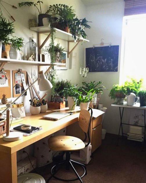 15 ý tưởng trồng cây trong nhà theo phong cách hiện đại, những người yêu cây nhất định đừng bỏ qua-3