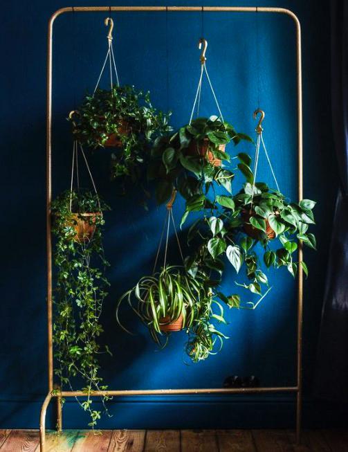 15 ý tưởng trồng cây trong nhà theo phong cách hiện đại, những người yêu cây nhất định đừng bỏ qua-5