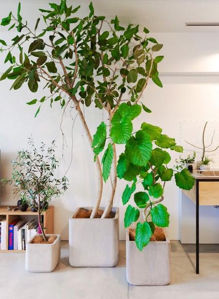 15 ý tưởng trồng cây trong nhà theo phong cách hiện đại, những người yêu cây nhất định đừng bỏ qua-6