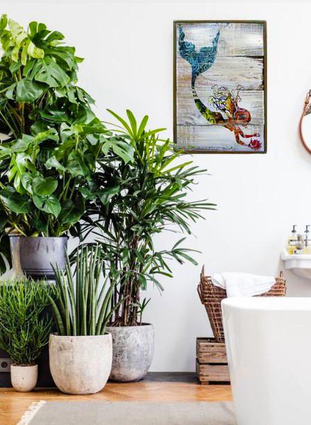 15 ý tưởng trồng cây trong nhà theo phong cách hiện đại, những người yêu cây nhất định đừng bỏ qua-7