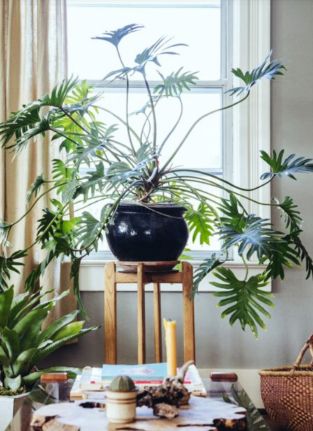 15 ý tưởng trồng cây trong nhà theo phong cách hiện đại, những người yêu cây nhất định đừng bỏ qua-12