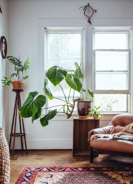 15 ý tưởng trồng cây trong nhà theo phong cách hiện đại, những người yêu cây nhất định đừng bỏ qua-13