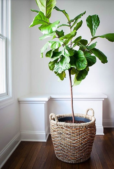 15 ý tưởng trồng cây trong nhà theo phong cách hiện đại, những người yêu cây nhất định đừng bỏ qua-9
