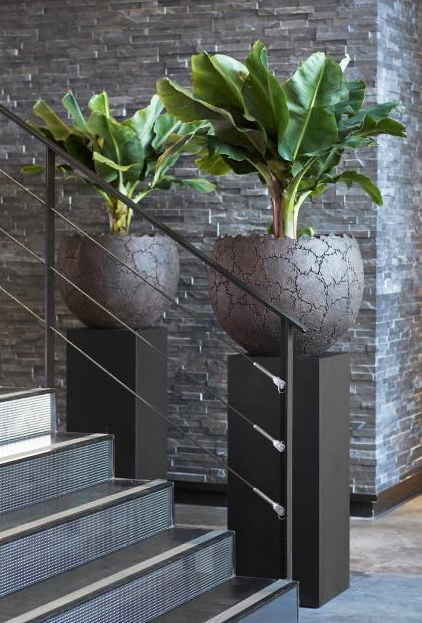 15 ý tưởng trồng cây trong nhà theo phong cách hiện đại, những người yêu cây nhất định đừng bỏ qua-14