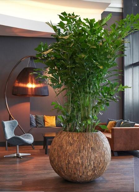 15 ý tưởng trồng cây trong nhà theo phong cách hiện đại, những người yêu cây nhất định đừng bỏ qua-21