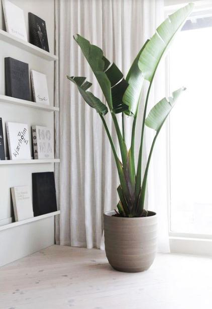15 ý tưởng trồng cây trong nhà theo phong cách hiện đại, những người yêu cây nhất định đừng bỏ qua-22