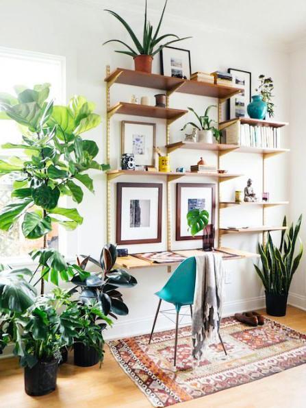 15 ý tưởng trồng cây trong nhà theo phong cách hiện đại, những người yêu cây nhất định đừng bỏ qua-25