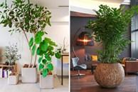 15 ý tưởng trồng cây trong nhà theo phong cách hiện đại, những người yêu cây nhất định đừng bỏ qua