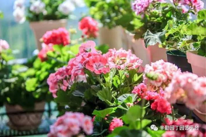 Ban công chỉ rộng vỏn vẹn 7m² nhưng tràn ngập hoa đẹp như cổ tích của bà mẹ 2 con-2