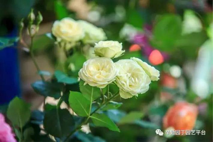 Ban công chỉ rộng vỏn vẹn 7m² nhưng tràn ngập hoa đẹp như cổ tích của bà mẹ 2 con-5