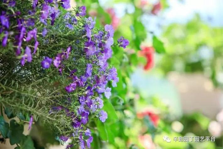 Ban công chỉ rộng vỏn vẹn 7m² nhưng tràn ngập hoa đẹp như cổ tích của bà mẹ 2 con-6
