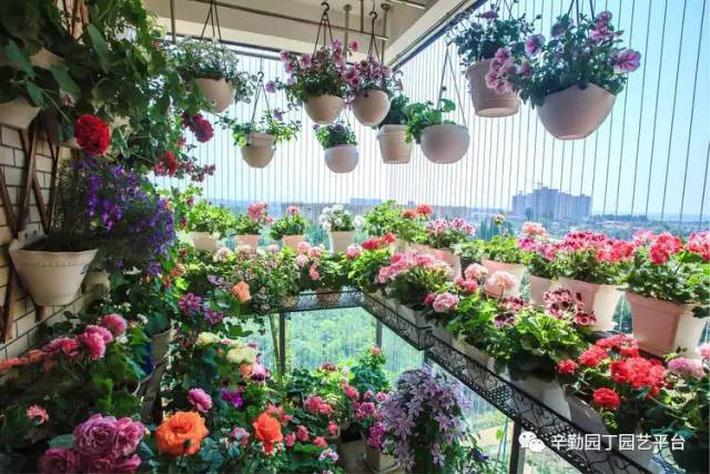 Ban công chỉ rộng vỏn vẹn 7m² nhưng tràn ngập hoa đẹp như cổ tích của bà mẹ 2 con-8