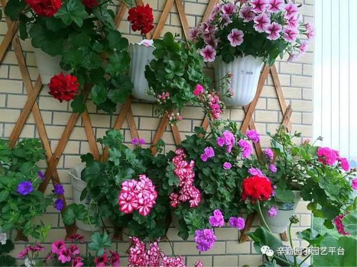 Ban công chỉ rộng vỏn vẹn 7m² nhưng tràn ngập hoa đẹp như cổ tích của bà mẹ 2 con-9
