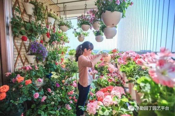 Ban công chỉ rộng vỏn vẹn 7m² nhưng tràn ngập hoa đẹp như cổ tích của bà mẹ 2 con-11