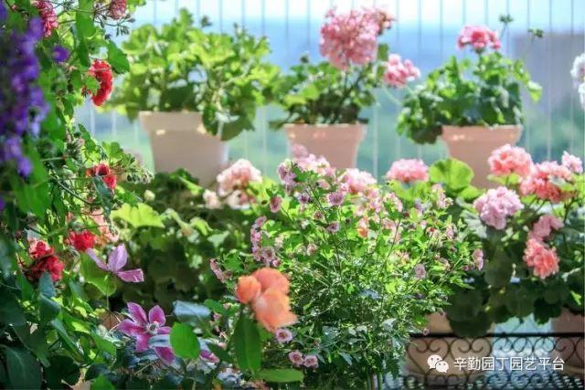 Ban công chỉ rộng vỏn vẹn 7m² nhưng tràn ngập hoa đẹp như cổ tích của bà mẹ 2 con-12