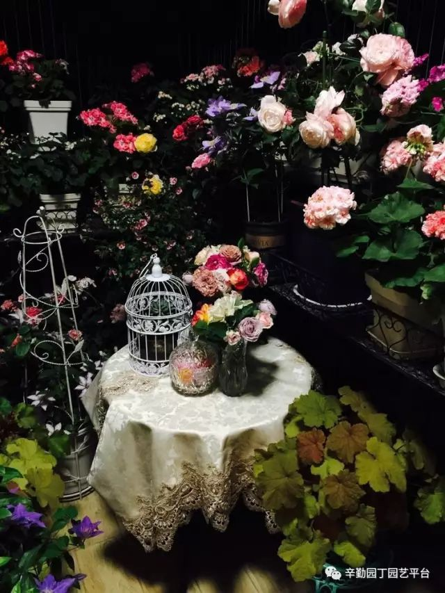 Ban công chỉ rộng vỏn vẹn 7m² nhưng tràn ngập hoa đẹp như cổ tích của bà mẹ 2 con-13