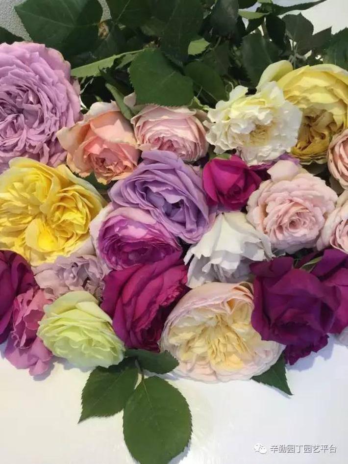 Ban công chỉ rộng vỏn vẹn 7m² nhưng tràn ngập hoa đẹp như cổ tích của bà mẹ 2 con-19