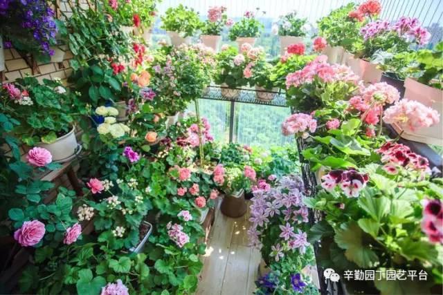 Ban công chỉ rộng vỏn vẹn 7m² nhưng tràn ngập hoa đẹp như cổ tích của bà mẹ 2 con-21