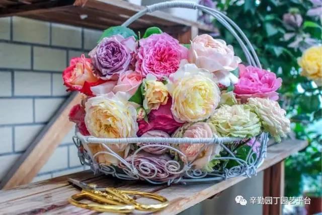 Ban công chỉ rộng vỏn vẹn 7m² nhưng tràn ngập hoa đẹp như cổ tích của bà mẹ 2 con-24