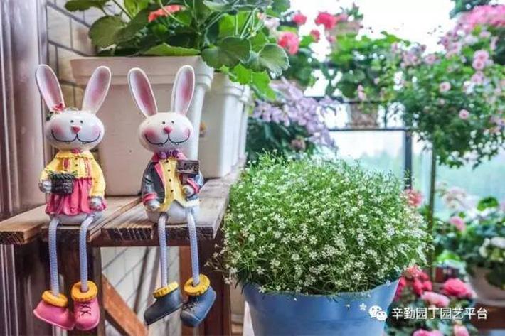 Ban công chỉ rộng vỏn vẹn 7m² nhưng tràn ngập hoa đẹp như cổ tích của bà mẹ 2 con-27