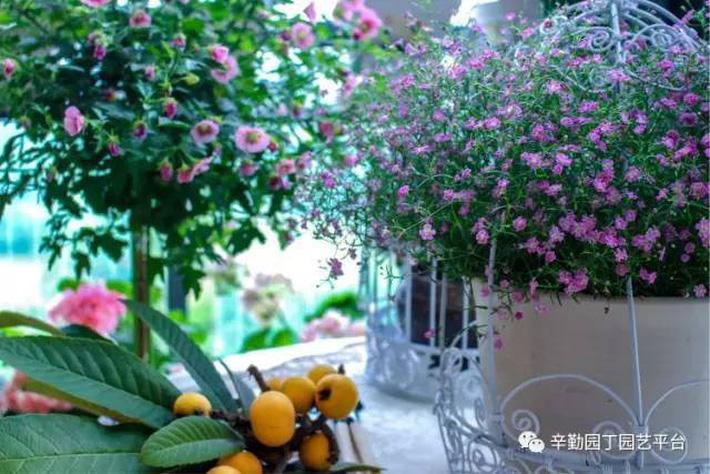 Ban công chỉ rộng vỏn vẹn 7m² nhưng tràn ngập hoa đẹp như cổ tích của bà mẹ 2 con-29