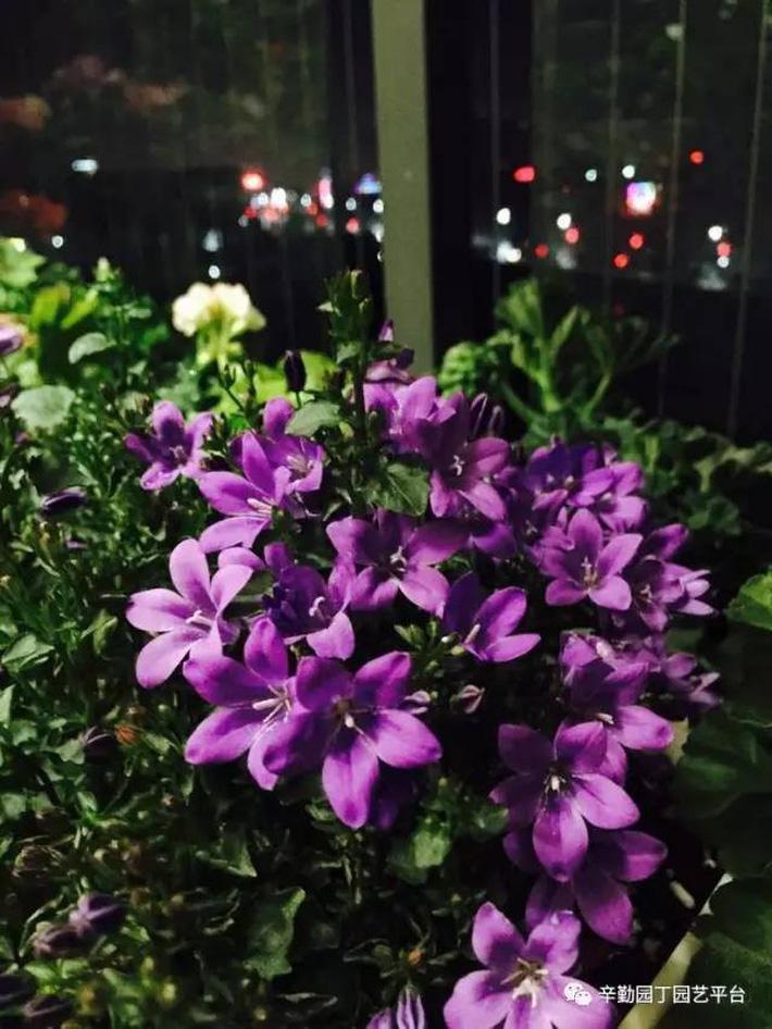 Ban công chỉ rộng vỏn vẹn 7m² nhưng tràn ngập hoa đẹp như cổ tích của bà mẹ 2 con-31