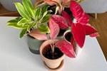 9 loại cây có thể hút nhiệt và làm cho ngôi nhà bạn thêm ấm cúng vào mùa thu - đông