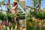 Vườn hoa rực rỡ quanh năm trên sân thượng của mẹ đảm ở Hà Nội dù mỗi ngày chỉ mất 5 - 10 phút chăm sóc