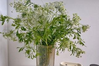 Mới - lạ hoa cà rốt, thu hút nhiều bà nội trợ mua về cắm